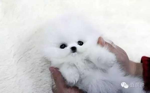世上最萌的狗狗图片 世界上最萌最可爱的20只小狗